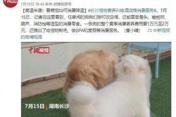 长沙宠物寄养训练酒店推消暑服务